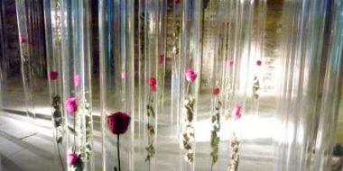 Biennale rose